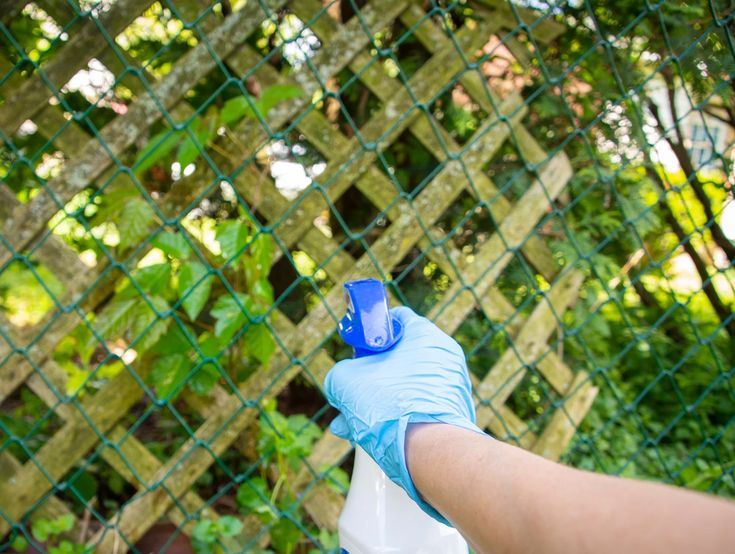 How to safely remove poison ivy from your garden in 2020