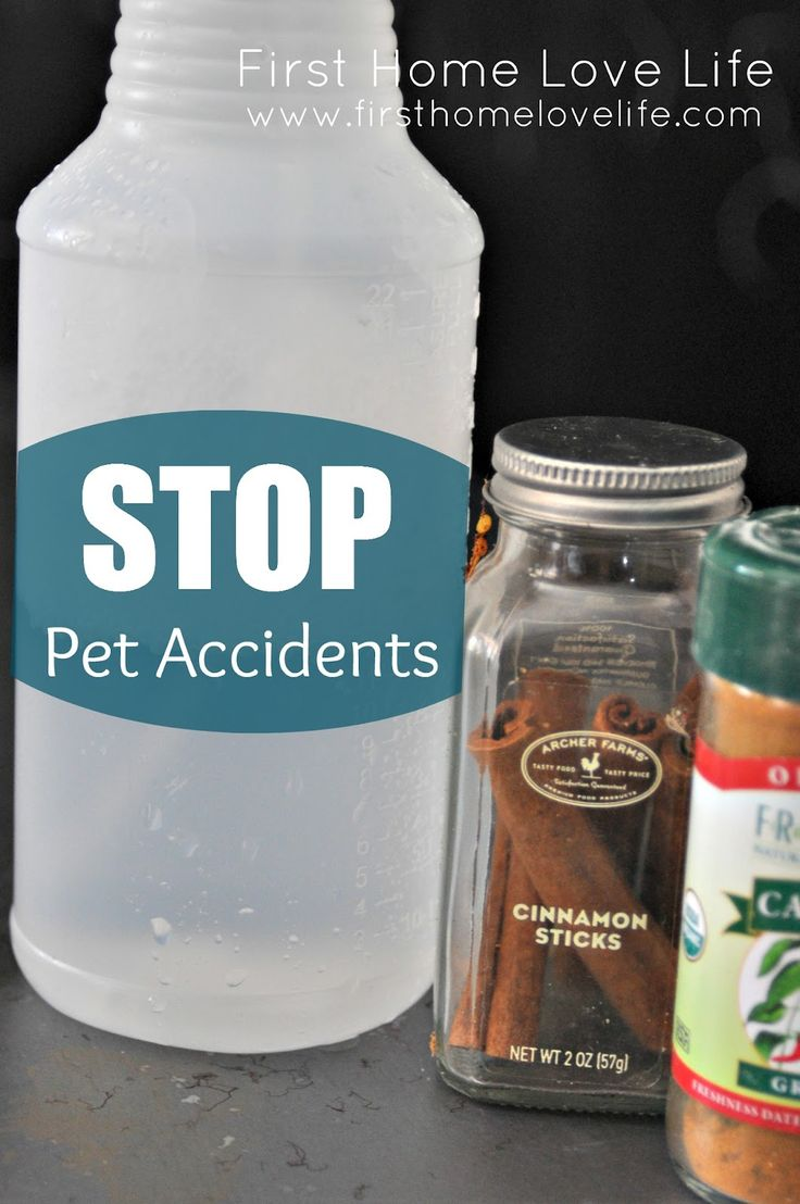 Pet Accidents: a spray that promises the accidents will be done forever! I need to do this