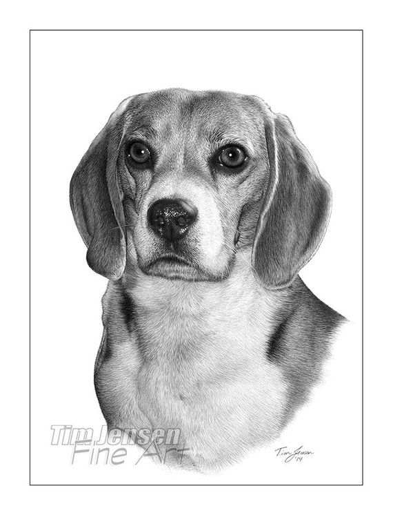 Items Similar To Beagle Dog With Long Ears And Wet Nose In A