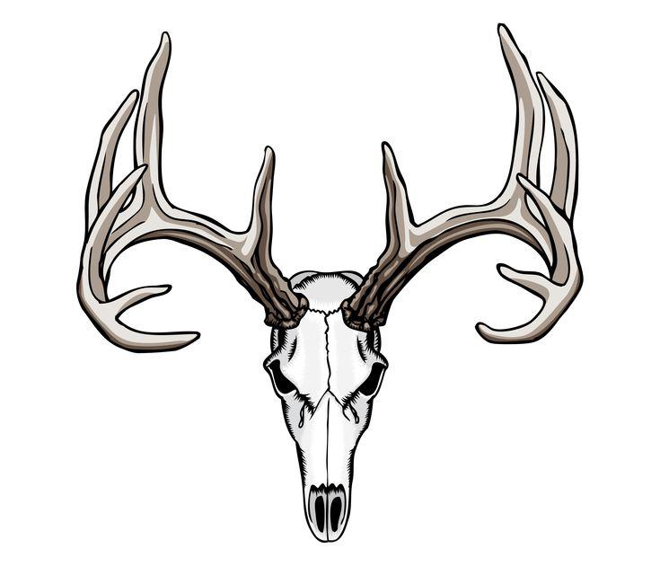 Whitetail Deer Skull Tattoos