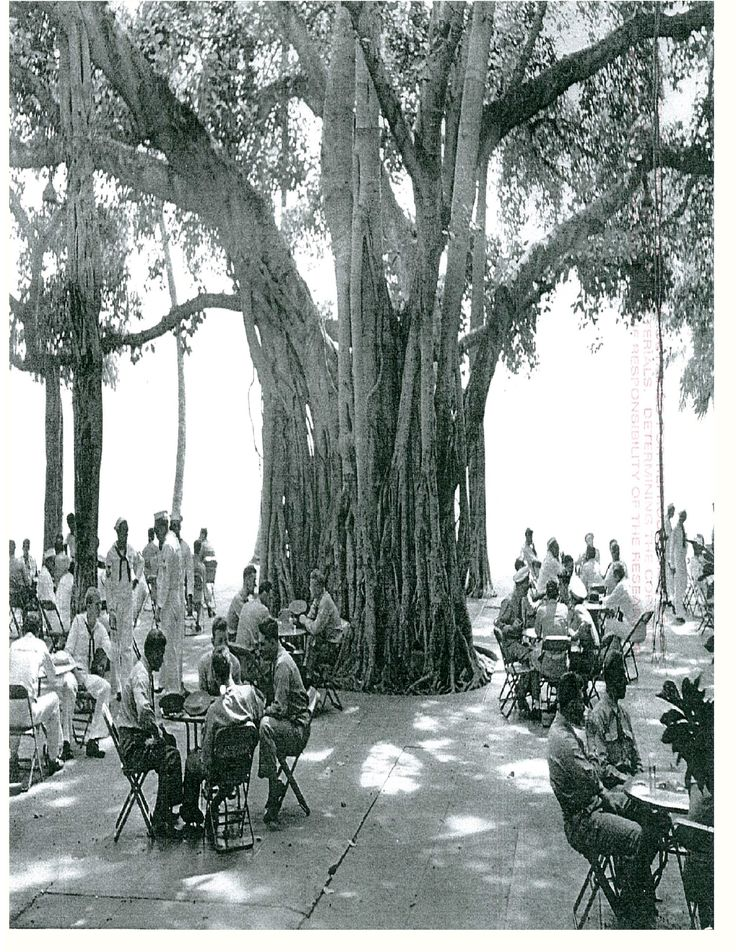 Historic Moana Surfrider - 1930s It's almost magical being able to still lunch under this tree · Waikiki BeachOahu HawaiiMoana SurfriderVintage ...