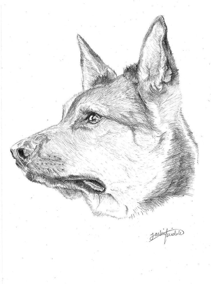 German Shepard $25 Print, art, drawing www.petsbypencil.co.nz