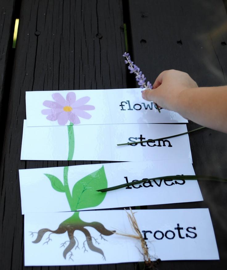 Cute flower part lesson!