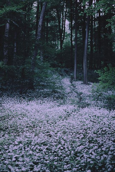 This photo seems rich with potential descriptions - twilight, aromas - forest in switzerland // Olivia Harmon