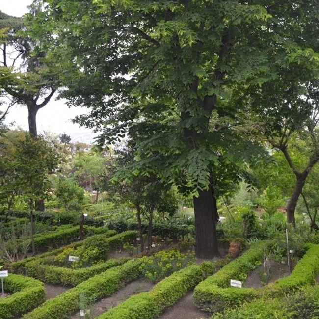 Süleymaniye'de gizli bir bahçe.. İstanbul Üniversitesi Fen Fakültesi'ne ait olan arazi, Türkiye'nin ilk botanik bahçesi olarak 1932 yılında kurulmuş. Yüzlerce çeşit bitki arasında, 3500 yıl önce yaşayan bitki gruplarının ataları ve 130- 1400 yıllık geçmişleriyle yaşayan fosil bitkiler de yer alıyor.