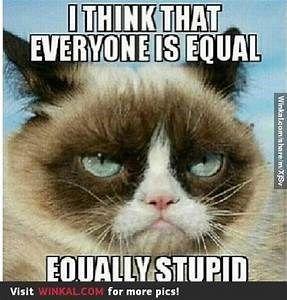 Hier ist, was mürrische Katze über dumme Leute zu sagen hat   – Cat Behaviour
