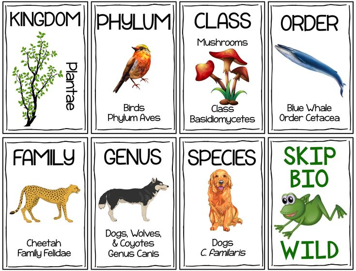 From Domain to Species, this cooperative learning card game will reinforce Classification Hierarchy in your Life Science or Biology classroom.