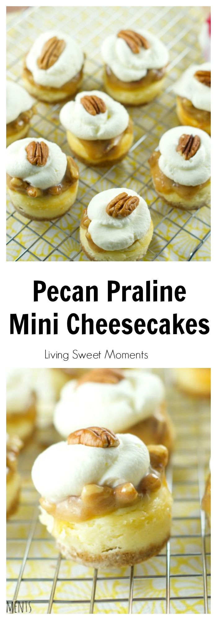 Pecan Praline Mini Cheesecakes - this is the best cheesecake recipe ever! Vanilla cheesecake bites are topped with pecan praline and chantilly cream. I want them everyday for dessert. More on livingsweetmoments.com