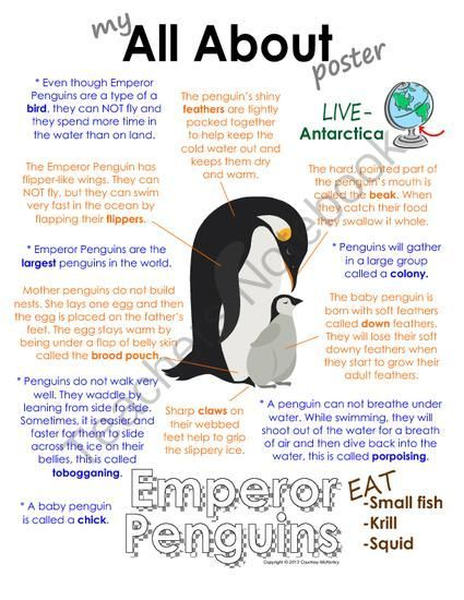 My All About Emperor Penguins Book - (Antarctic/Polar Animals) from Courtney McKerley on http://TeachersNotebook.com (9 pages)  - Also available in a polar animal bundle pack with walrus, polar bear, caribou and Arctic wolf. (Workbook, worksheet, printable, unit study, lesson)
