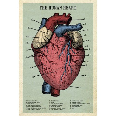 The Human Heart Adhesive Print