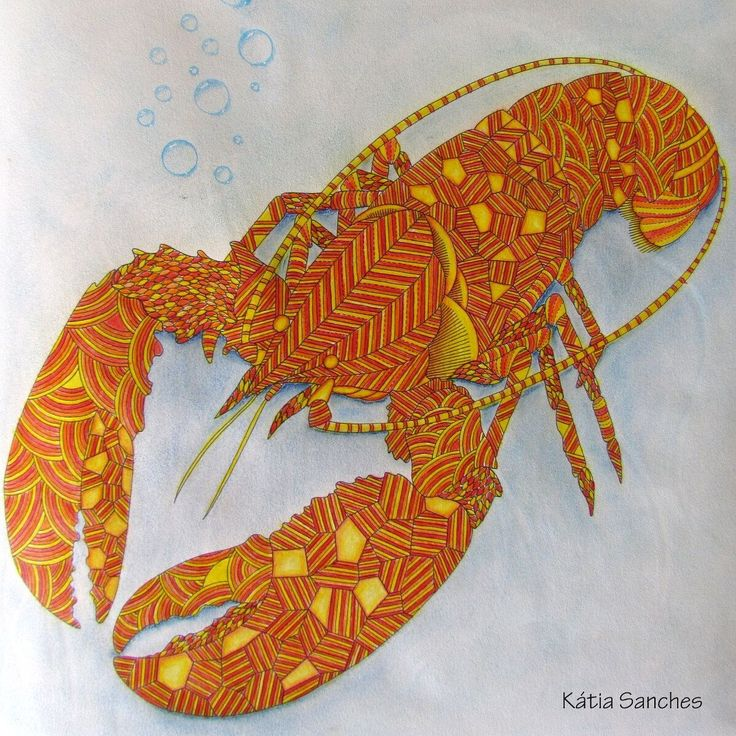 Animal Kingdom Coloring Book Lobster Best Images About Dierenrijk On