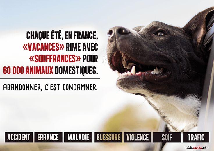DEFENSE CAUSE ANIMALE - ABANDONS 2016