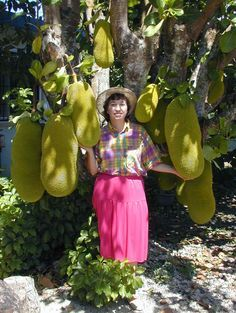 Jack-fruit, considered the world's largest fruit! It looks ugly but it doesn't taste too bad.