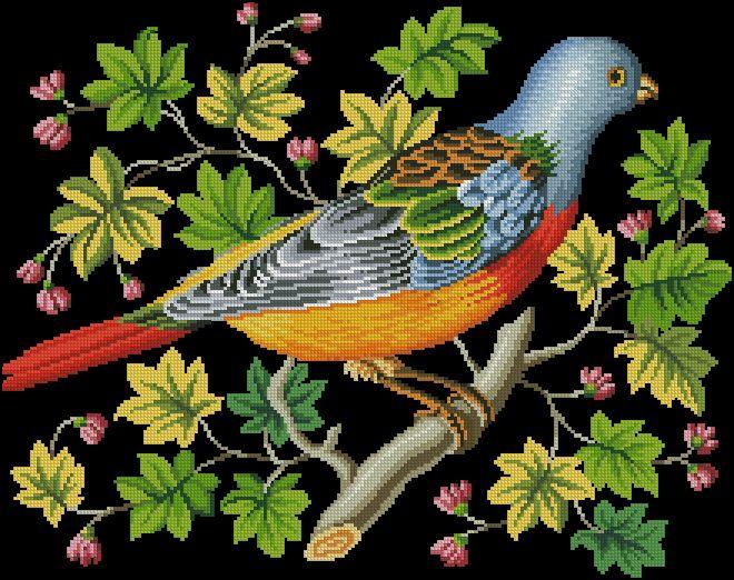 Gallery.ru / Фото #4 - Попугайчик на ветке - Kalla