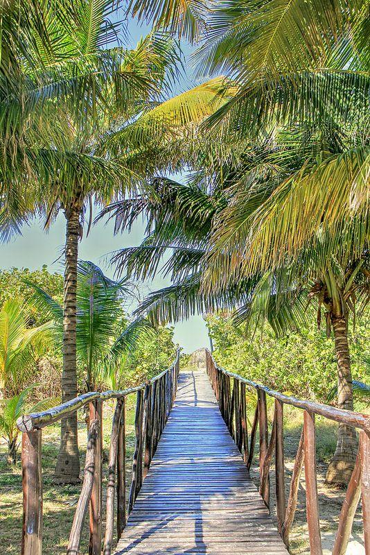 Tropical Walkway - Varadero, Cuba