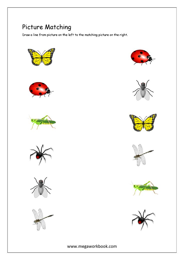 Picture Matching Worksheet