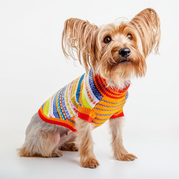 Furball Fashion: The Trendiest Duds For Chilly Dogs