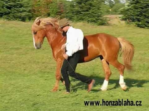 Honza Blaha - Gaston