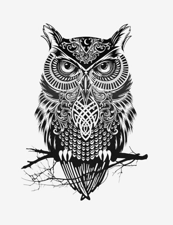 Scary owl illustration in black & white