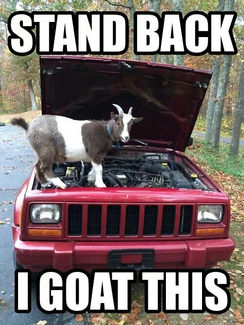 It's true, all goats possess the basic skills necessary to maintain and repair automotive engines.