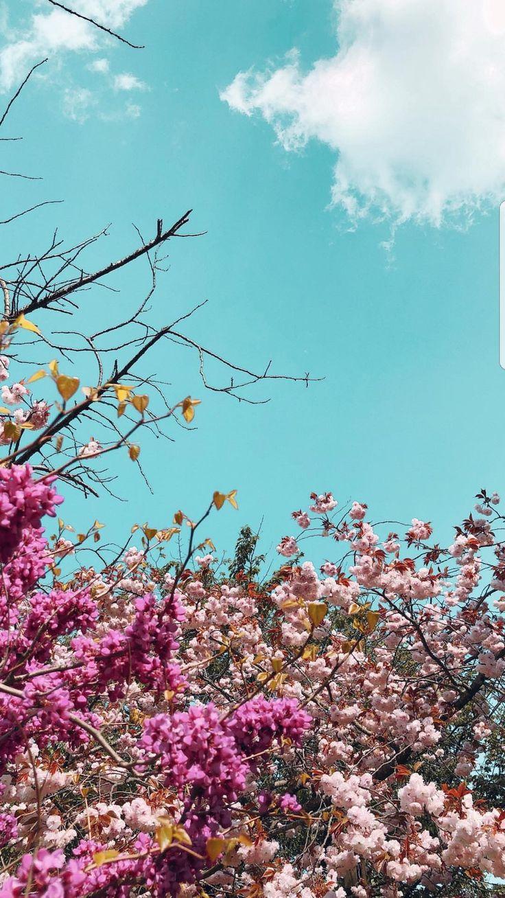 14 best flowers images on Pinterest