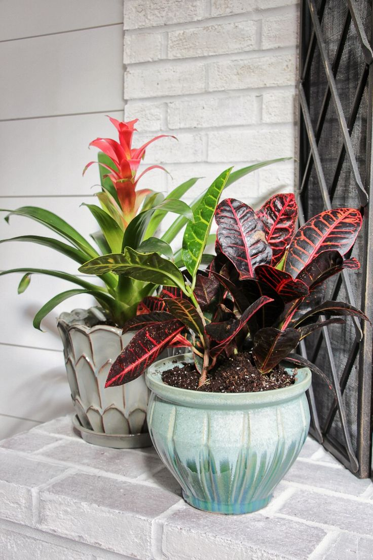 Best 25 Indoor Tropical Plants Ideas On Pinterest Foliage Plants Palm House Plants And