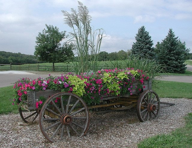 Wagon Of Old Flower Bed