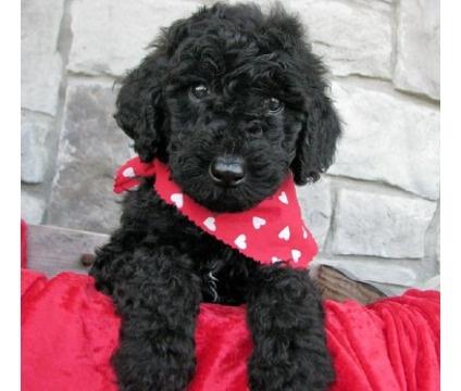 Happy Valentines Puppy