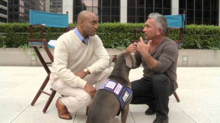 'Dog Whisperer' on Getting Over the Fear of Dogs