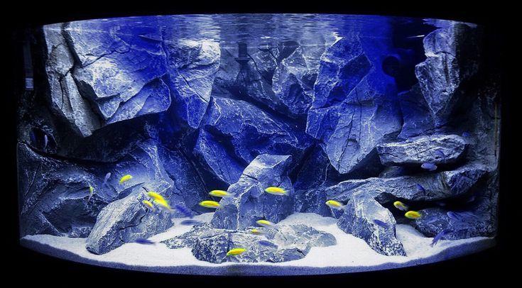 Aquadecor Aquarium 3d Background James Forgacs Aquadecor Aquarium 3d Background Our Juwel Trigon Dee Aquarium Backgrounds Fish Tank Saltwater Tank