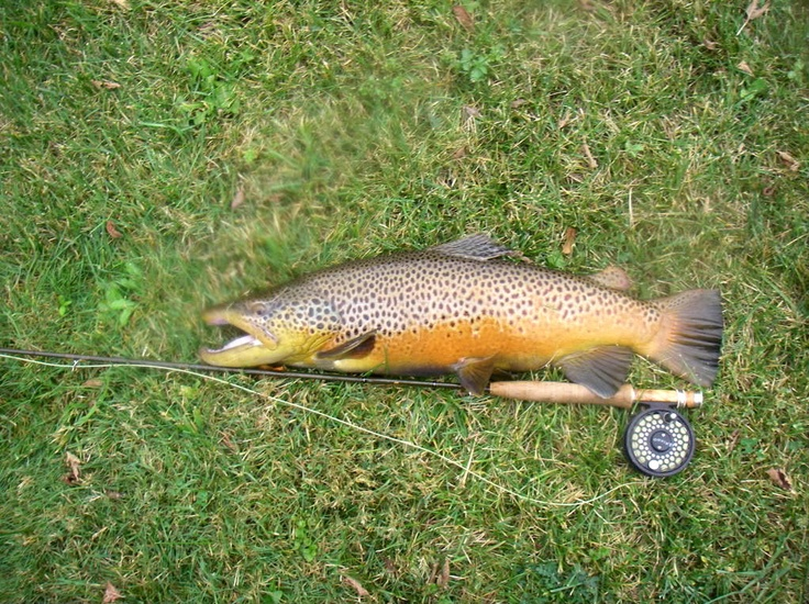 134 best my town newville pa images on pinterest for Best trout fishing in pa