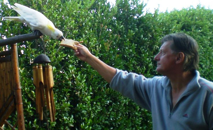 2009 feeding the local Cockatoo