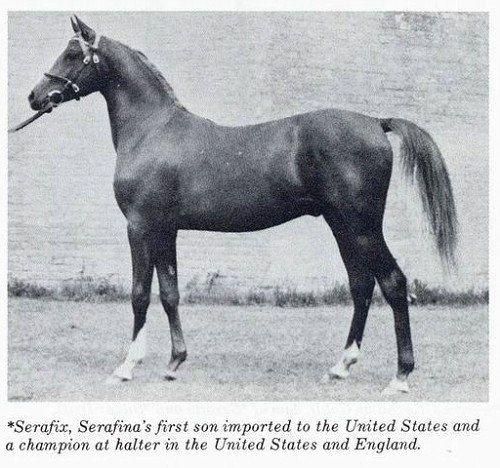 17 Best images about famous horses on Pinterest   Horse ...