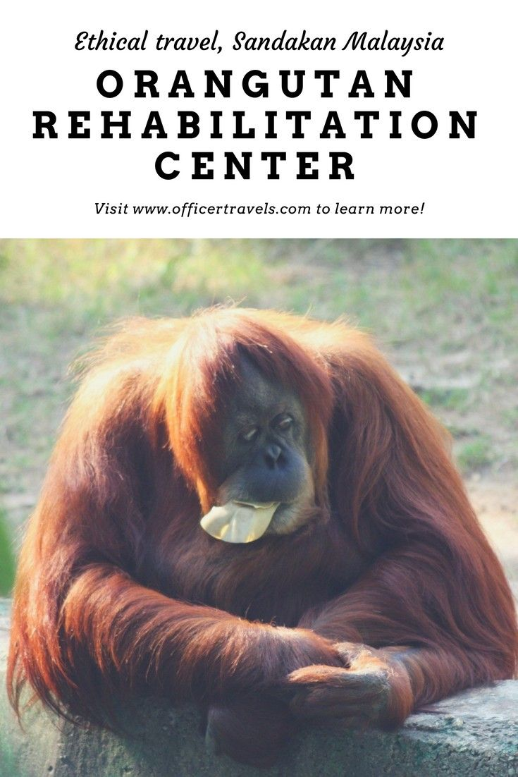 If You Re Looking For An Ethical Animal Experience In Malaysia You Re In Look Wildlife Travel Ethical Travel Travel Destinations Asia