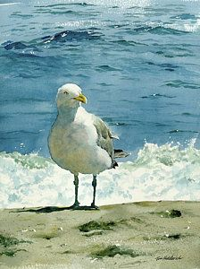Watercolor Painting - Montauk Gull by Tom Hedderich