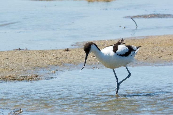 The Avocet House is named after the Avocet bird that can be found just outside the gates of Casa Flor de Sal in the salt marshes of Ria Formosa Natural Parc. Algarve. Portugal