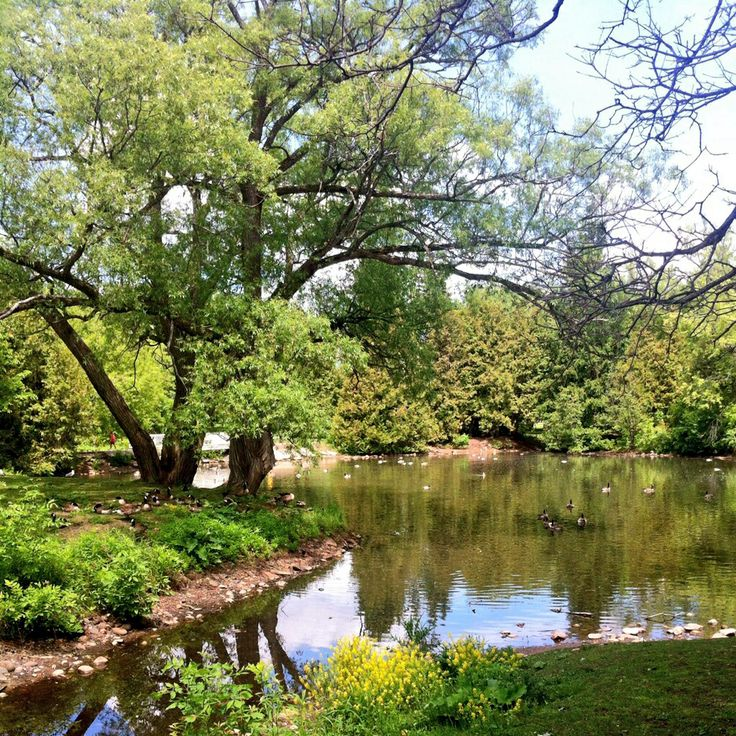 Duck Pond at Bellevue Park Sault Ste. Marie, Ontario