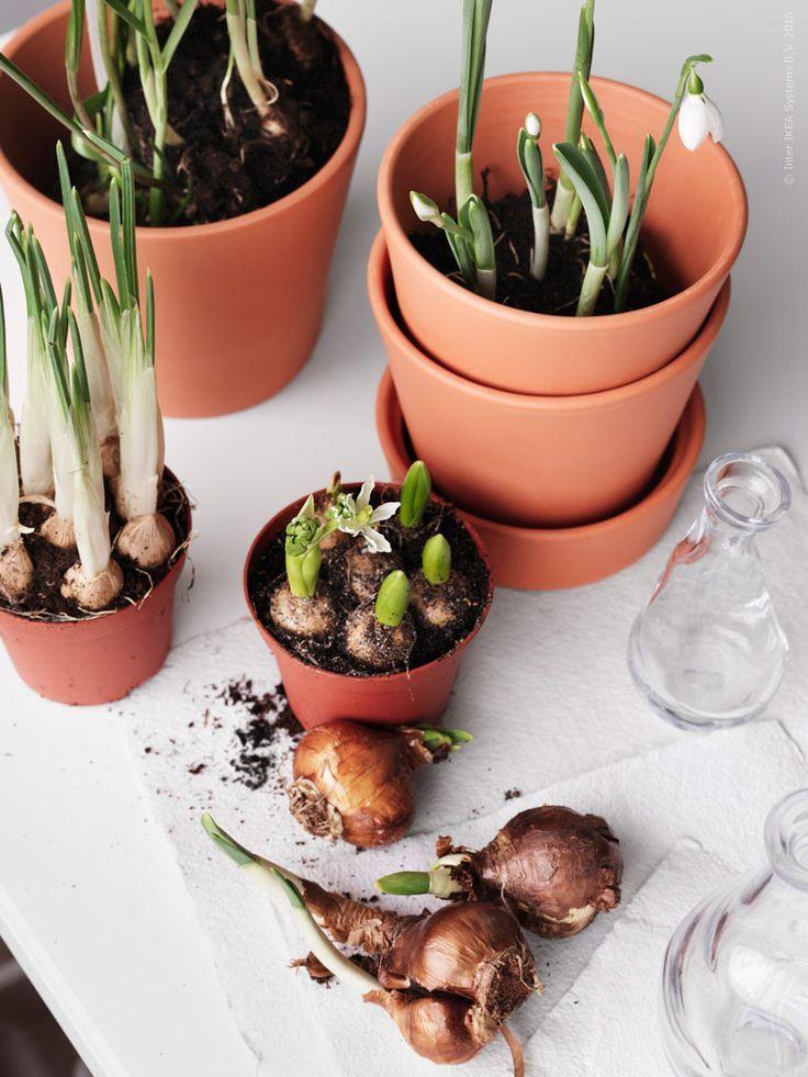 INGEFÄRA bloempot met schotel   #IKEA #IKEAnl #bloemen #bloembol #lente #pasen