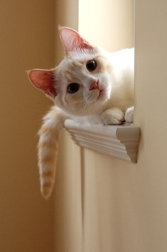 Lovely cat photo...