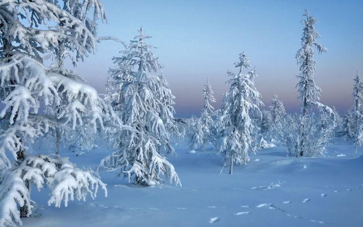 Χειμώνα, δάσος, φύση, χειμώνα, τα δέντρα στο χιόνι διανυσματικό