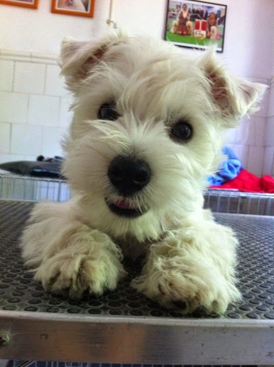 See more Top 5 Most Talkative Dog Breeds