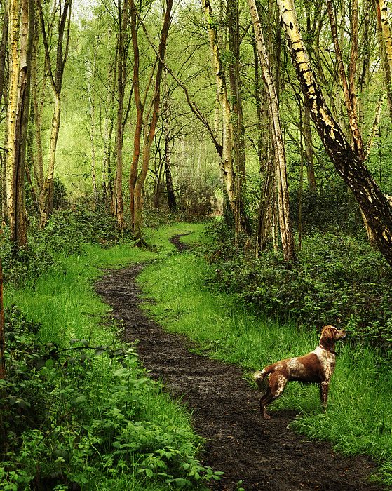Arbrook Woods, Public Land in Claygate, Surrey_ UK