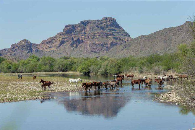 I cavalli del Salt River