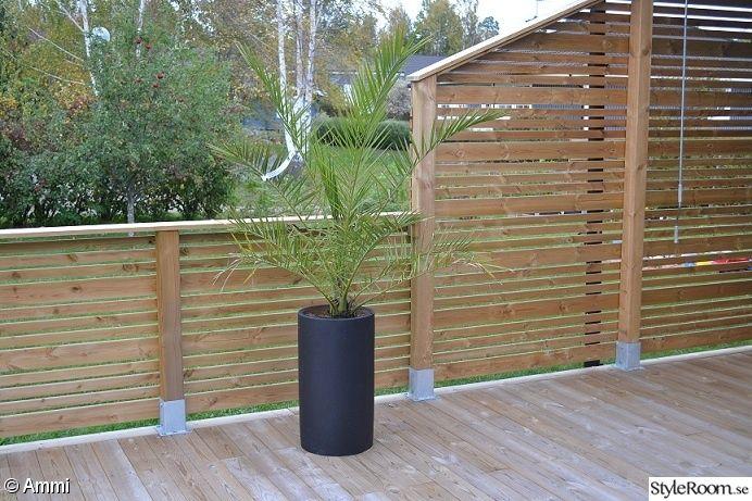 ... Staket Palm, Och Plankhöjd, Palms, Patio Ideas, 404727 Staket Jpg 580