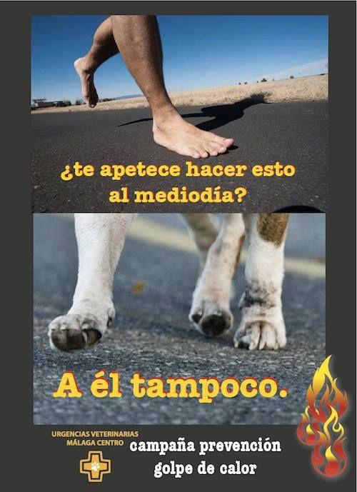 Los perros adultos y cachorros sufren especialmente el calor en las superficies de cemento