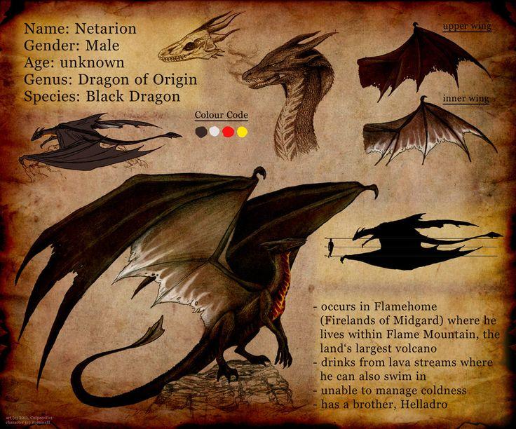 "Dragon ID card / Drago, carta d'identità - ""Commission: Sheet Netarion"", Art by Culpeo-Fox on deviantART"