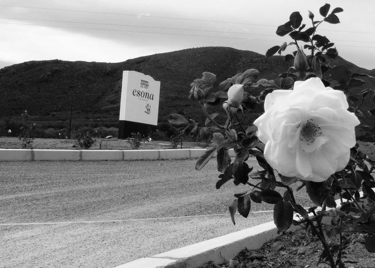 Let our white roses embrace you in friendship when entering our farm, and offer you new memories to be made at our Old Cellar, and symbolize remembrance, love, and respect in a message of farewell at your departure.
