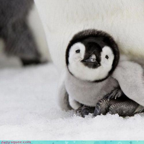 For my love, he loves pinguins