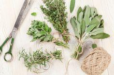 Fitoenergética, o poder de cura através das plantas. Alecrim, manjericão e outras ervas que não sabíamos quão poderosas são!