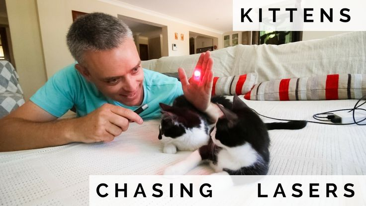Cute kitten video... don't mind if i do! http://www.sopurrfect.com/2017/03/kittens-chasing-lasers/